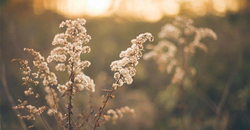 Pasture Herbage